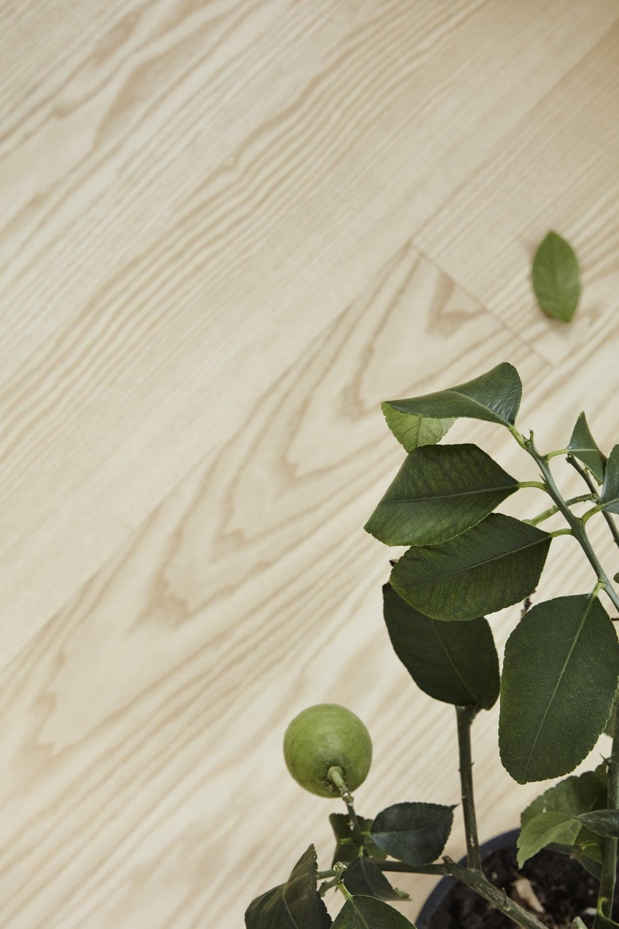 Timberwise parketti puulattia wooden floor parquet Saarni Ash Select îljyvaha wax oil_lahis1